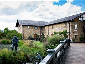 Year 4 @ London Wetland Centre | England | United Kingdom
